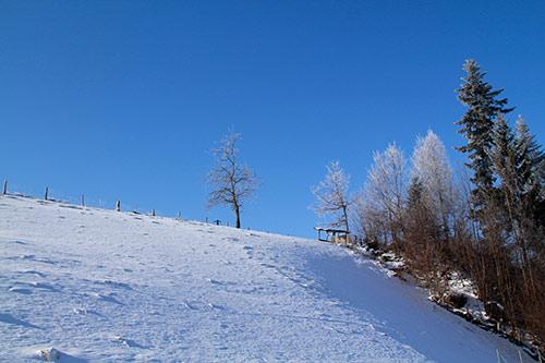 kostenlose winterbilder  lizenzfreie fotografien