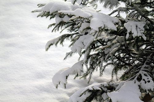 Weihnachtsbilder Neujahrsbilder.Kostenlose Winter Und Schneebilder Lizenzfrei Weihnachtsfotos