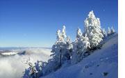Verschneite Weihnachtsbilder.Kostenlose Winterbilder Lizenzfreie Fotografien
